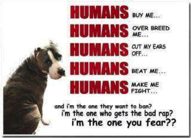 ... ://www.thelazypitbull.com/2012/02/pit-bull-facts-do-you-know-truth