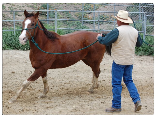 So You Want to Become a Horse Trainer? Here's What's Involved |Horse Training
