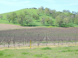 One of many vineyard views along our cycling routes on the west side of Paso.
