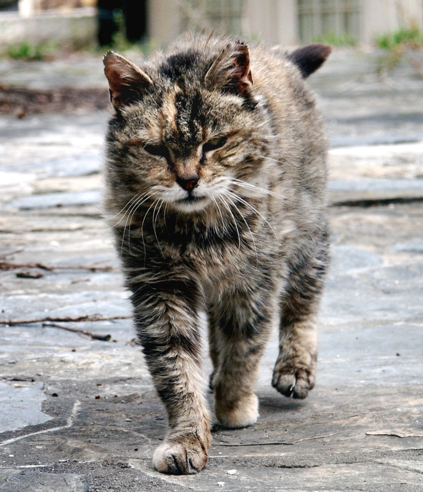 signs of fall #3: feral cats | ecologist's notebook