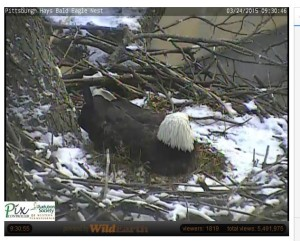 Photo Capture from Hays Eagle Cam