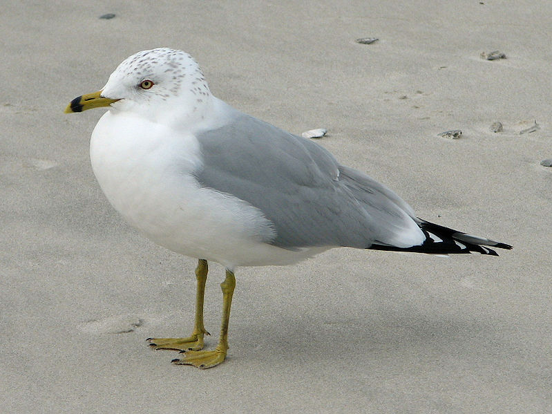 Signs of Summer 4: The Curious Case of the Missing Gulls