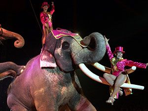 circus animal cruelty essays Angel gutierrez prof strizver-munoz enc1101 animal abuse for business circuses are promoted to be fun for everyone everybody goes to see the animals do.