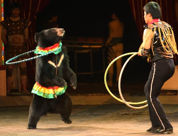 Shop for russian circus bear on Etsy the place to express your creativity through the buying and selling of handmade and vintage goods