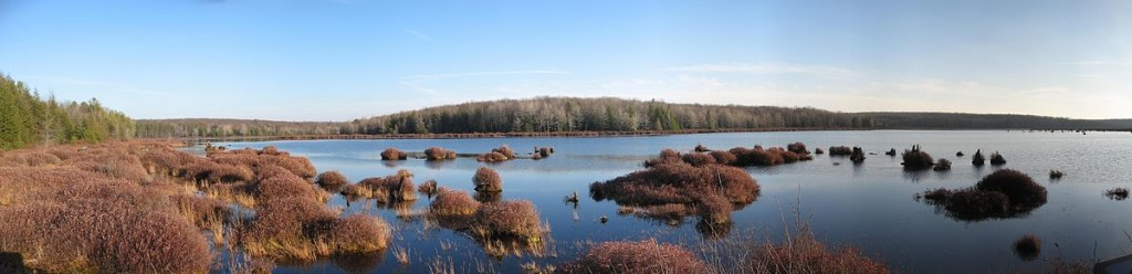 Part of the old bog and lake at Black Moshannon.