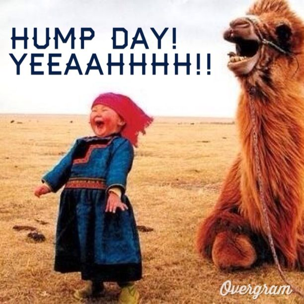 Why Do They Call Wednesday Hump Day