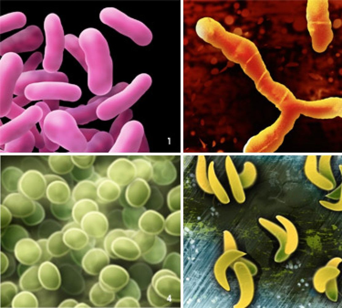 different types of germs preventing germs from leaving the hospital