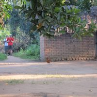 two students walking on a path with a chicken