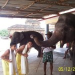 Photo of boys being blessed by an elephant in Sringeri