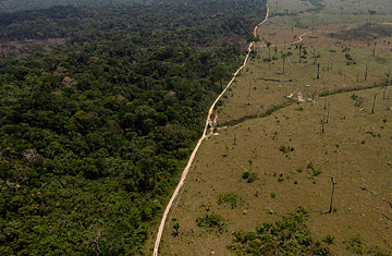 an overview of the global problem of deforestation and the need for urgent solutions Center for international environmental law (ciel)  an urgent, global response is needed  we need a more durable solution,.