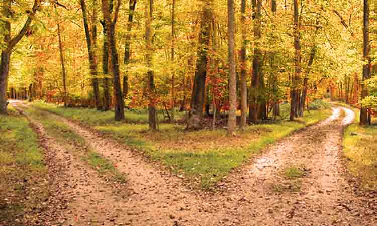 Diverging Yellow Woods