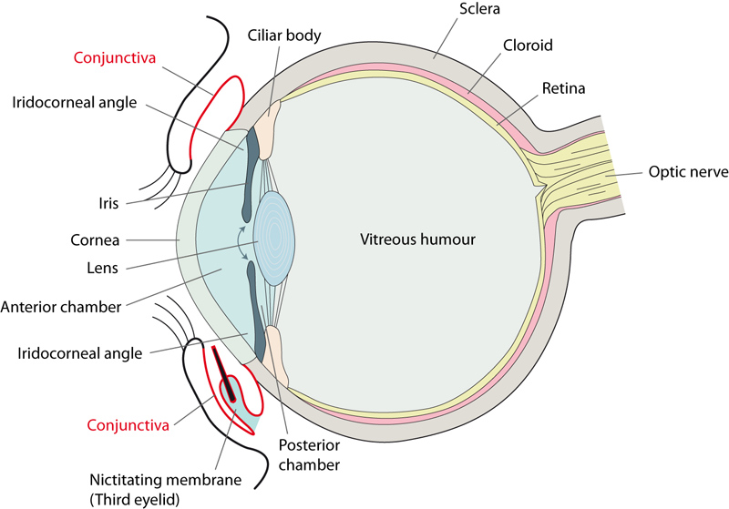 The Woman Who Could Hear Her Eyes Move | Medical Mysteries Passion Blog