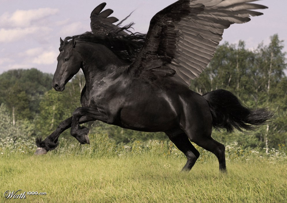 Hellhounds, Hippocampi, and Pegasi, Oh My! | Inspiration ...