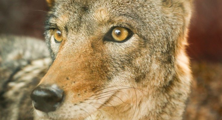Holtzinger Contributes To Through Wolf's Eyes