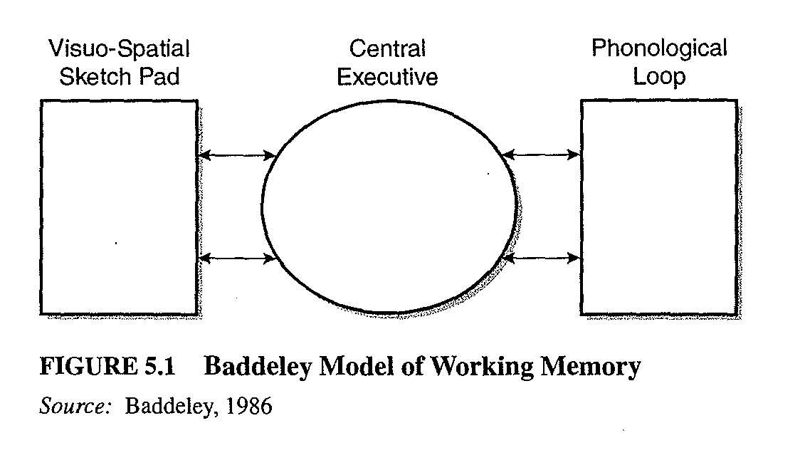 Training The Working Memory Model Psych 256 Cognitive Psychology Su14