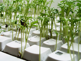 plant from keyboard
