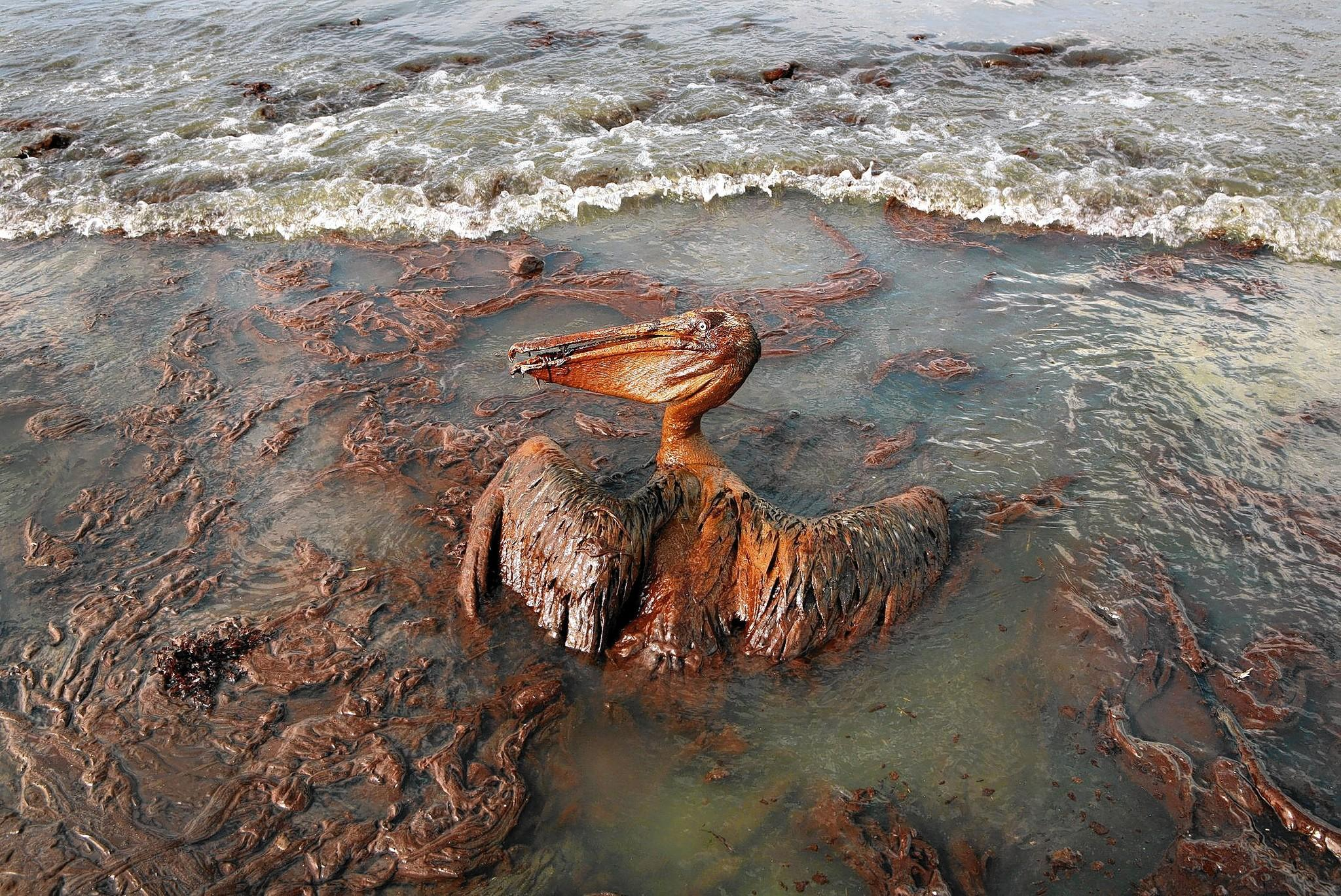 CI Environment: Opinions wanted on the Deepwater Horizon Oil Spill | A ...