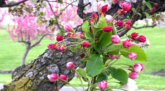 Arbor Day Reflections on the Buds and the Bees