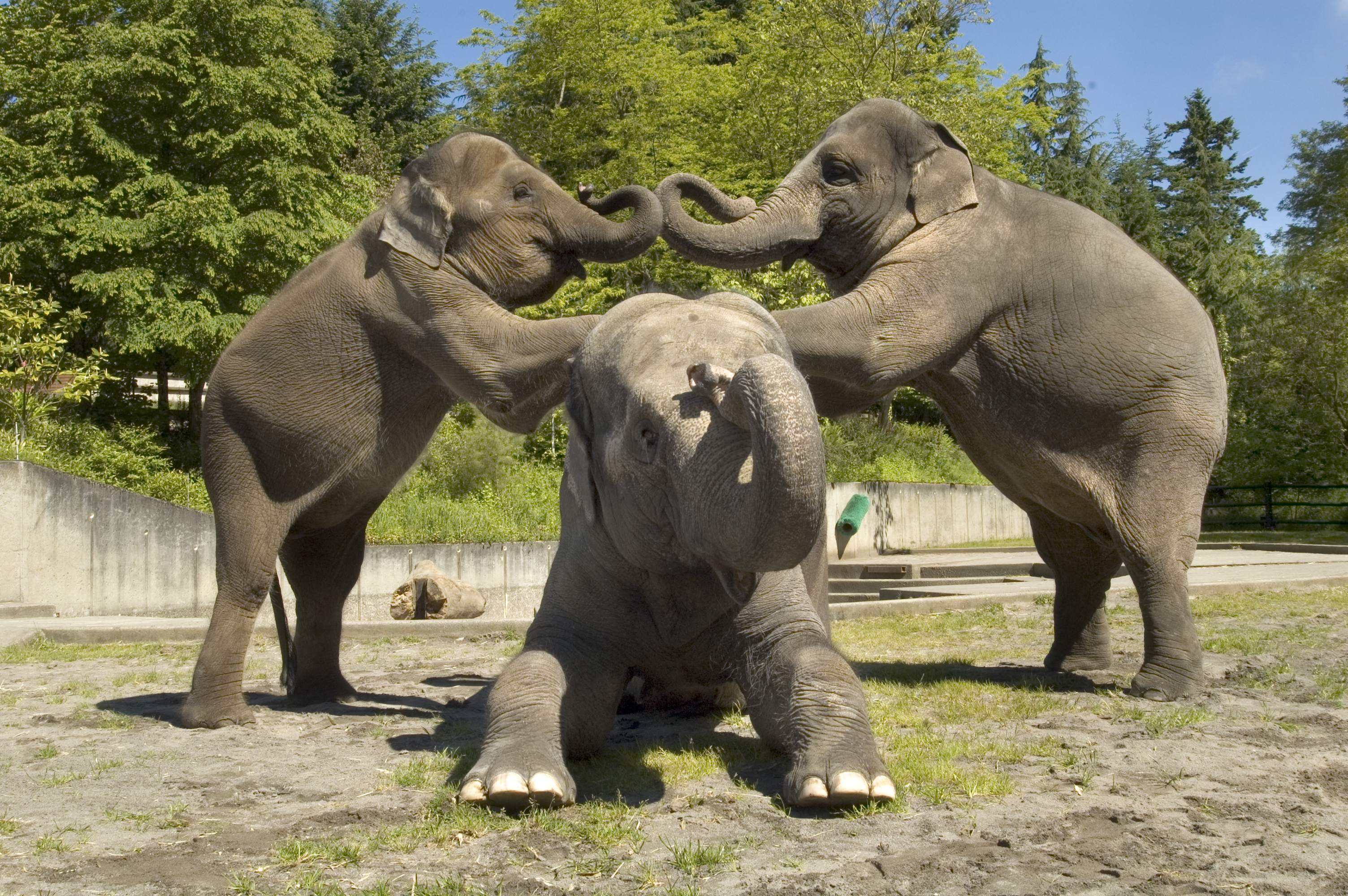 what is necessary for the human and elephant coexistence in the world Conflict between people and animals is one of the main threats to the continued survival of many species in different parts of the world, and is also a significant threat to local human.