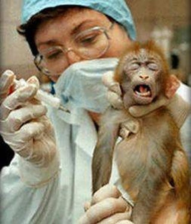 "essay on should animals be used for scientific experiment Free essay: ""why animal experiments are not necessary yet still to this day many companies continue to use animals for product and drug testing evidently, animal testing is a very controversial issue in the science and animal advocacy communities as it serves as a safer and cost- efficient way to test new medicines."