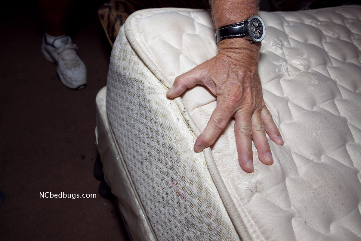 How To Get Rid Of Bed Bugs On Mattress