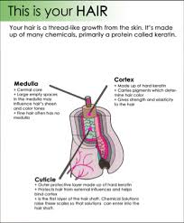 how does hair coloring work siowfa14 science in our world