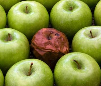 the rotten apple hypothesis provide examples of each theory The rotten apple hypothesis provide examples of each theory i probability theory  a branch of mathematics concerned with the analysis of random phenomena the outcome of a random event cannot be determined before it occurs, but it may be any one of several possible outcomes.