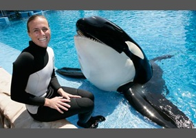 The Fate of Captive Orcas
