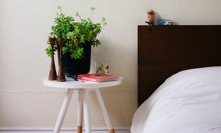 Whether To Put Plants In The Bedroom Is Actually Still A Controversial  Issue. Dr. Mao Suggested People To Remove The Plants From The Bedroom When  People Are ...