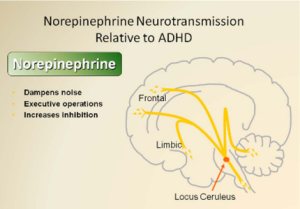 how to get adderall without adhd