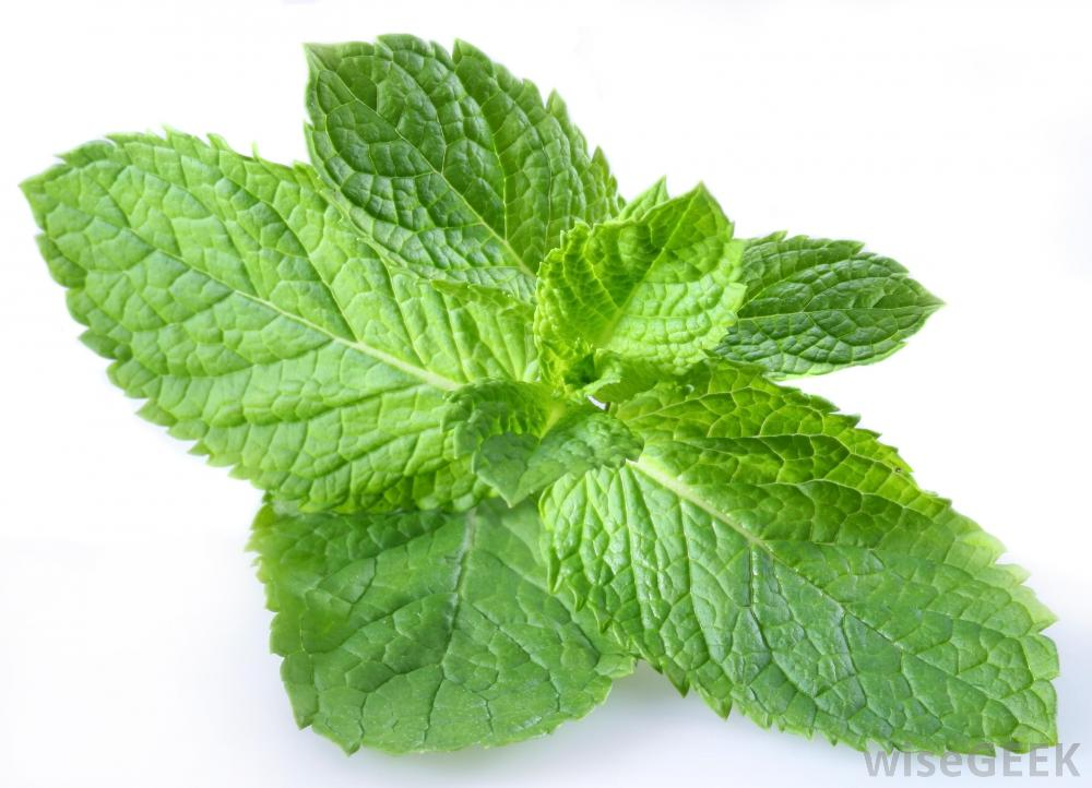 does peppermint have heeling powers siowfa15 science in our