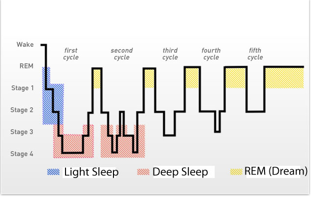 Stages Of Sleep Rem And Non Rem Sleep Cycles.html