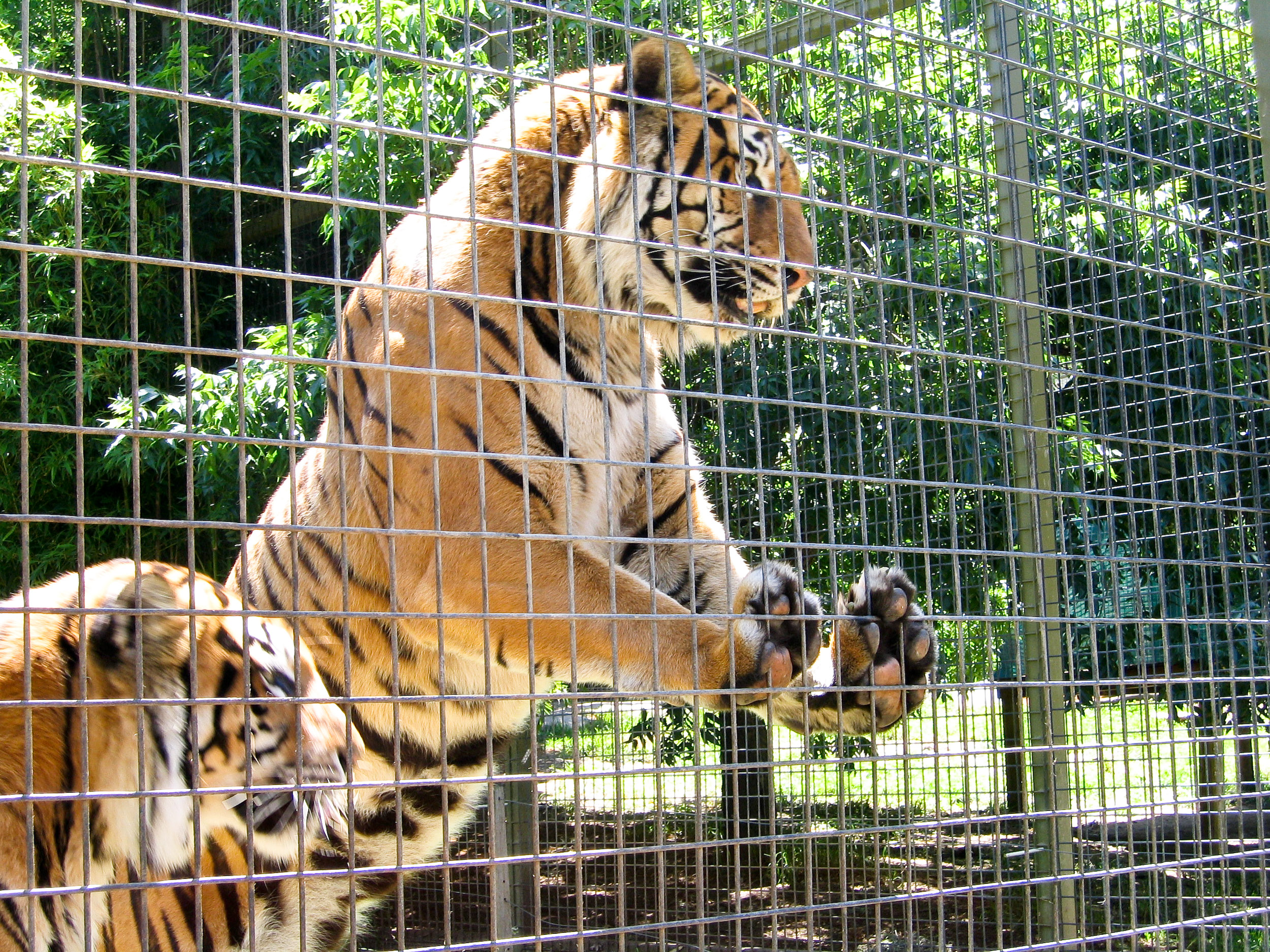 wild animals should not be kept in zoos