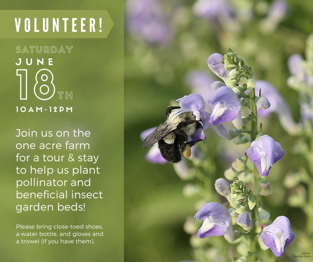 June 18 Volunteer Day