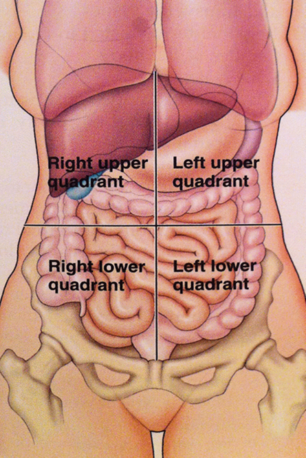 Assessment of GI | Everything you need to know about your GI System