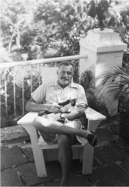 an analysis of ernest hemingways cat Search results you were looking for  analysis of a farewell to arms by ernest  two short stories by ernest hemingway 'a clean well lighted place' and 'the cat.