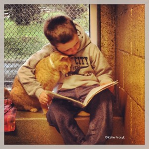 Photo of book buddy with orange cat
