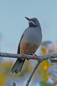 perched on branch