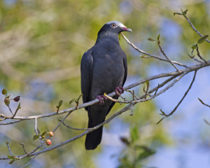 upright shot of pigeon on tree branch