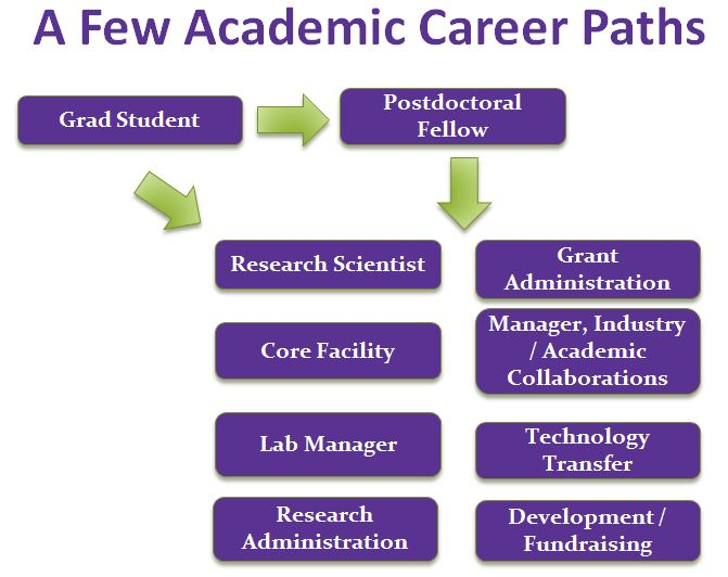 Here are some sample careers life science Ph.D students can apply for in academic fields.