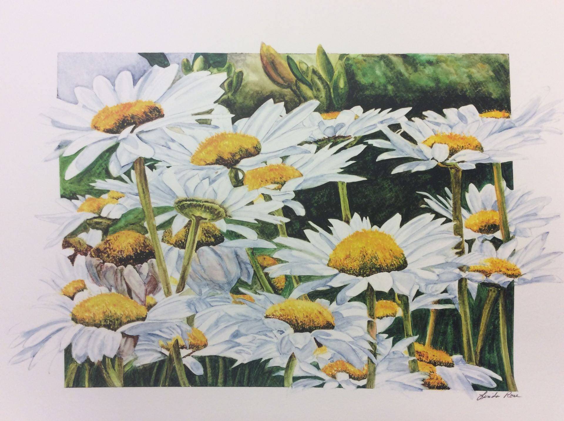 Painting by Linda Rose titled Field of Daisies