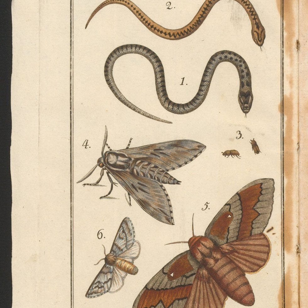 Illustrations of snakes and insects