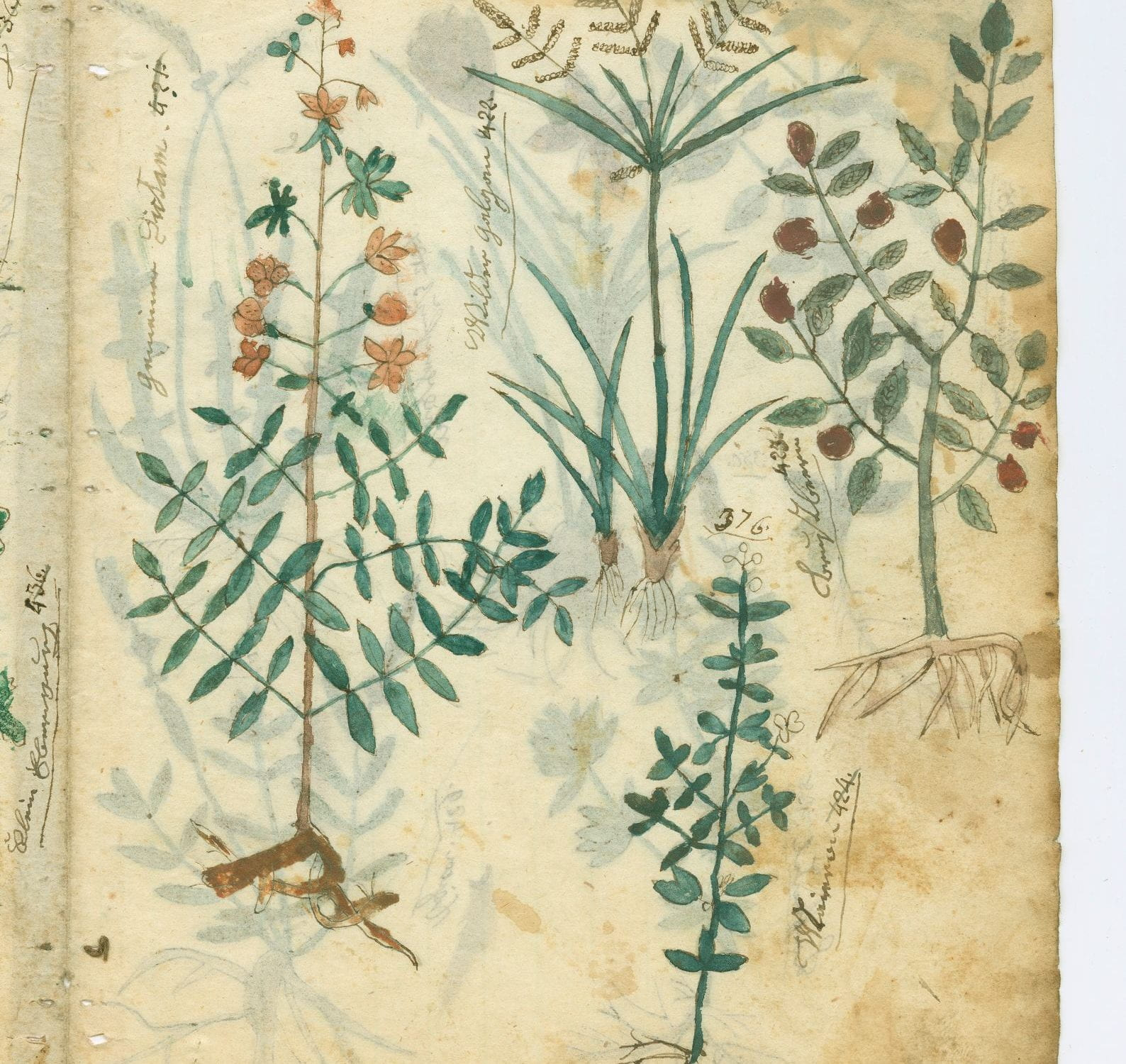 Philipp Lindemann, Herbal manuscript, circa 1835-1867