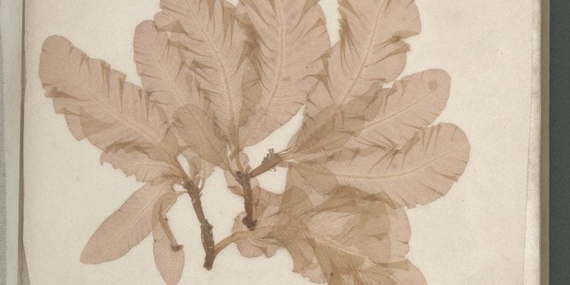 Page 2 of Seaweeds, Great Britain, circa 1850