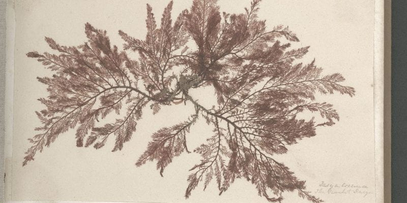 Page 5 of Seaweeds, Great Britain, circa 1850