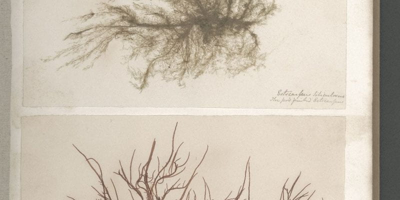 Page 6 of Seaweeds, Great Britain, circa 1850