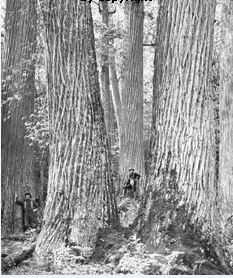 Forest History Society