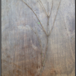 Moringa branch after a test of a design.