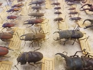 Angle 2, a close up, of the stag beetles showing their poor state prior to treatment