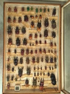 Before image of all the beetles prior to treatment
